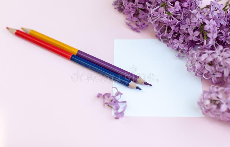 Hojas de la lila limpia blanca de las flores del papel y de la primavera, en un fondo rosado fotos de archivo libres de regalías