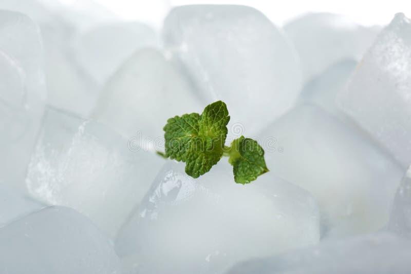 Hojas de la menta en los cubos de hielo contra el fondo blanco foto de archivo