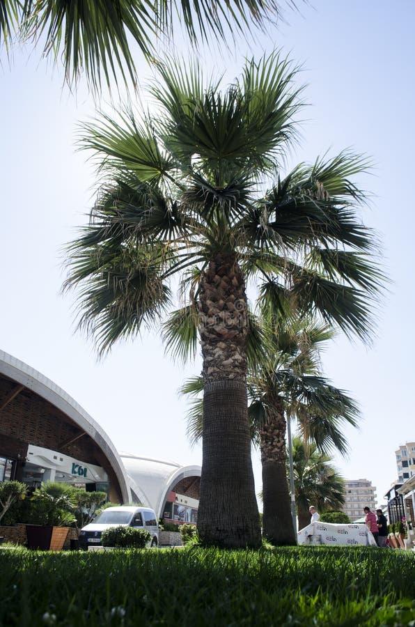 Hojas de la palmera en cielo azul con sol foto de archivo