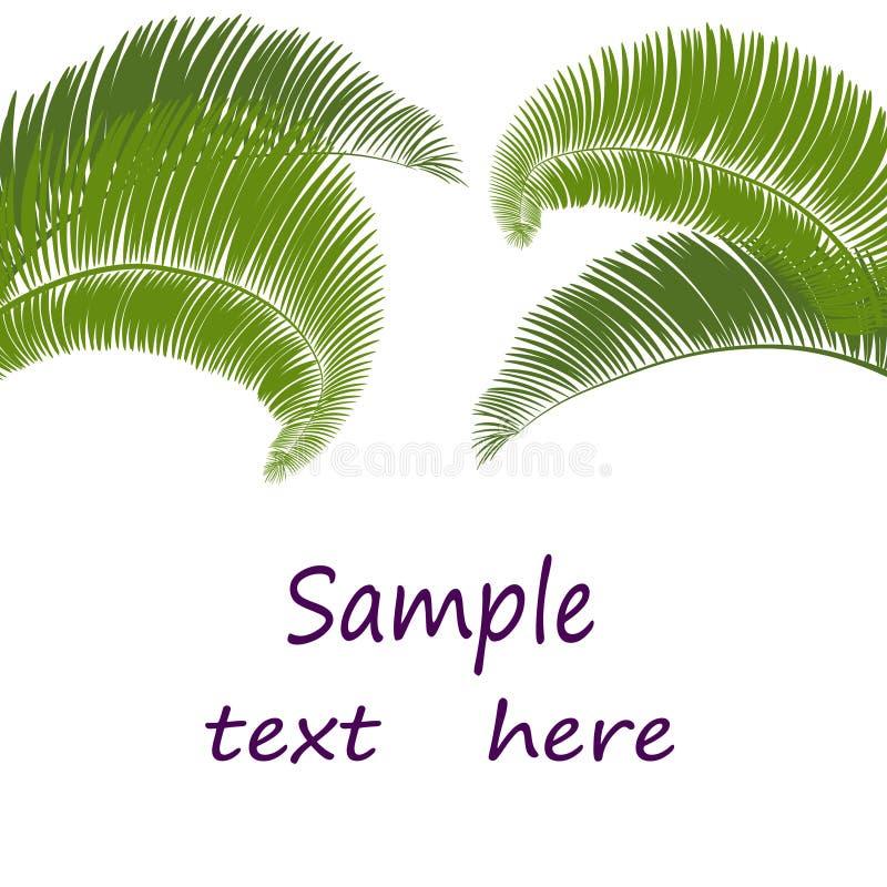 Hojas de la palmera en el fondo blanco Ilustración stock de ilustración