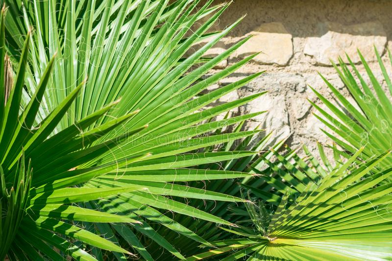 Hojas de la palmera imagen de archivo libre de regalías
