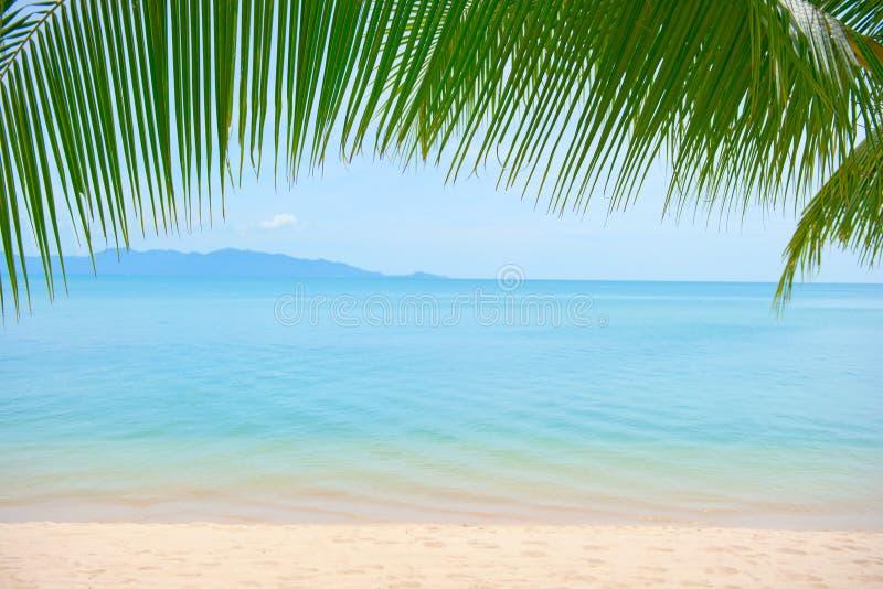 Hojas de la palmera sobre la playa de lujo imagen de archivo