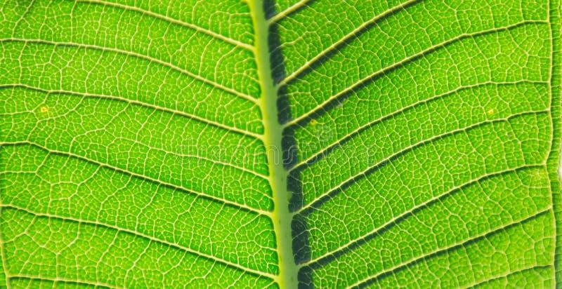 Hojas de la planta imagen de archivo