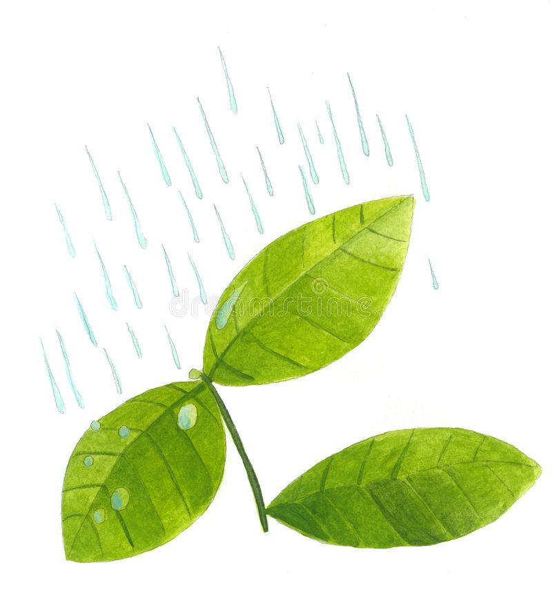Hojas de la planta en lluvia foto de archivo