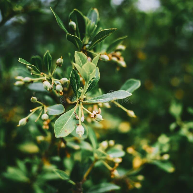 Hojas de la planta tropical foto de archivo
