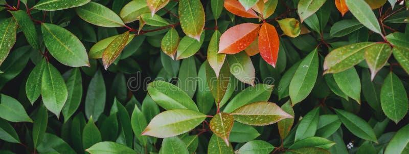 Hojas de la planta tropical fotografía de archivo
