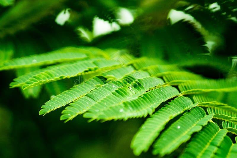 Hojas de la planta verde con gotear del agua imagen de archivo libre de regalías
