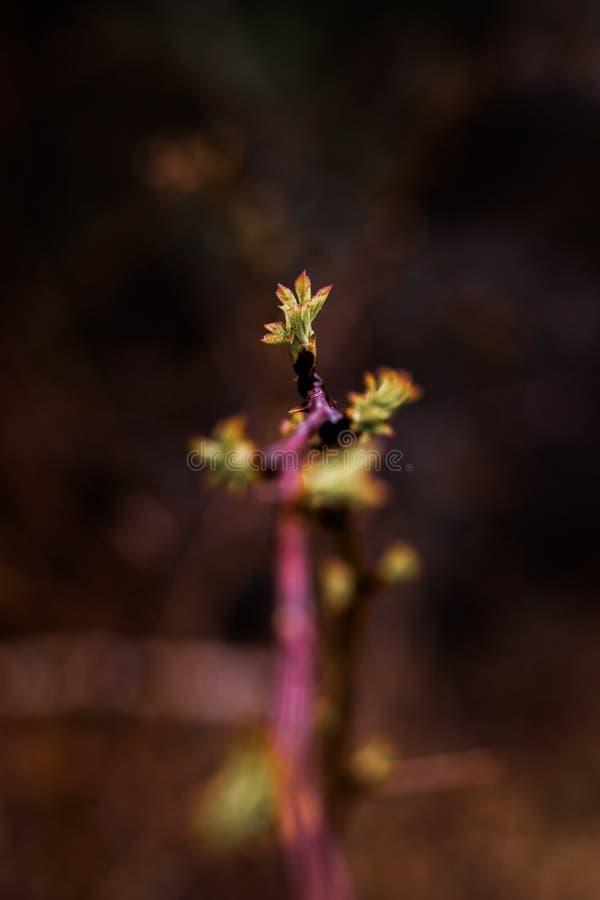 Hojas de la primavera foto de archivo libre de regalías