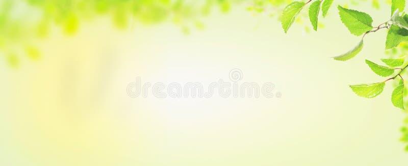 Hojas de la primavera, bandera para el sitio web