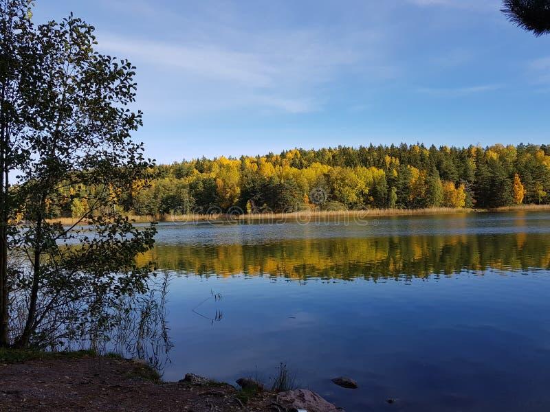 Hojas de la reflexión del otoño del lago Rösjön Suecia imagen de archivo