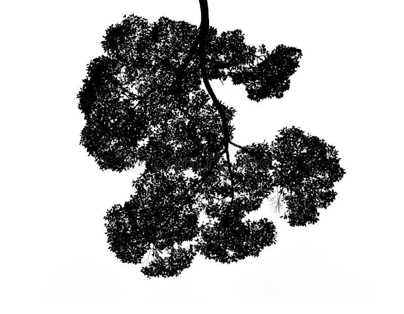 Hojas de la silueta del aislante de Bush en el fondo blanco stock de ilustración