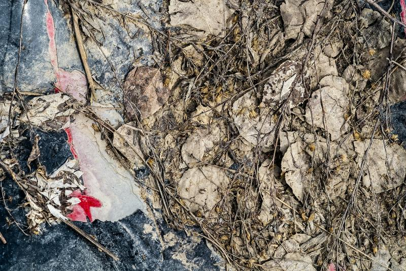 Hojas de las hierbas de la escena de la primavera foto de archivo