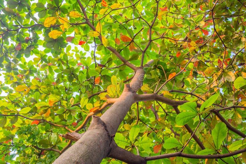 Hojas de los árboles imagen de archivo