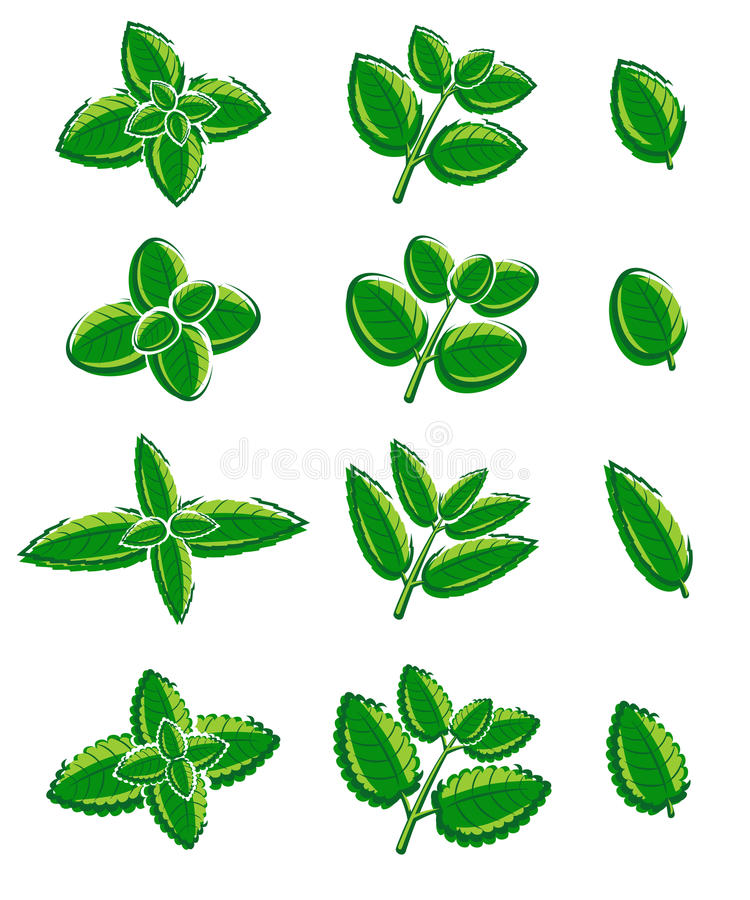 Hojas de menta fijadas Vector stock de ilustración