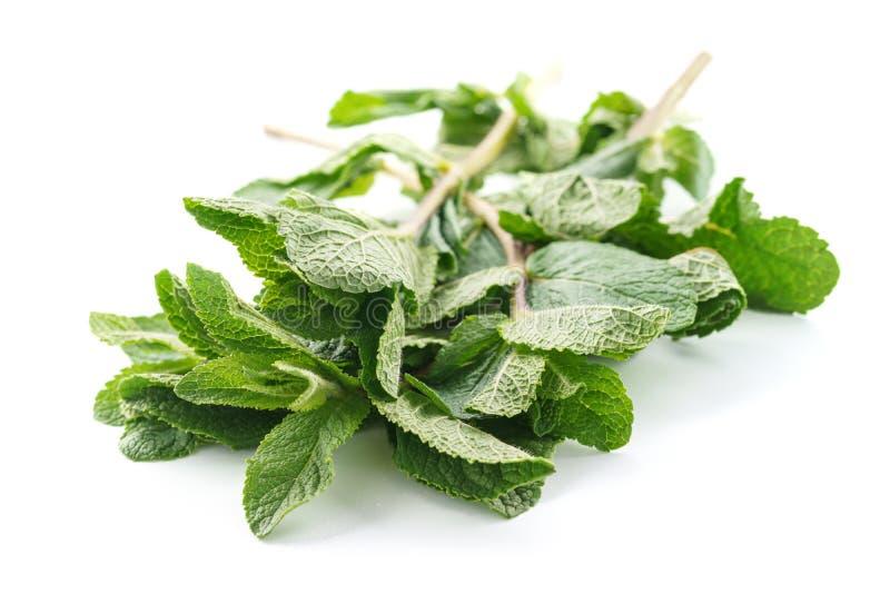 Hojas de menta fresca aisladas en blanco Hierbabuena o menta verde imágenes de archivo libres de regalías