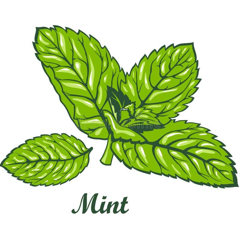 Hojas de menta verdes frescas ilustración del vector