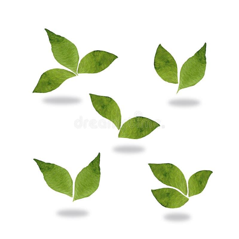 Hojas de menta verdes frescas aisladas en el fondo blanco stock de ilustración