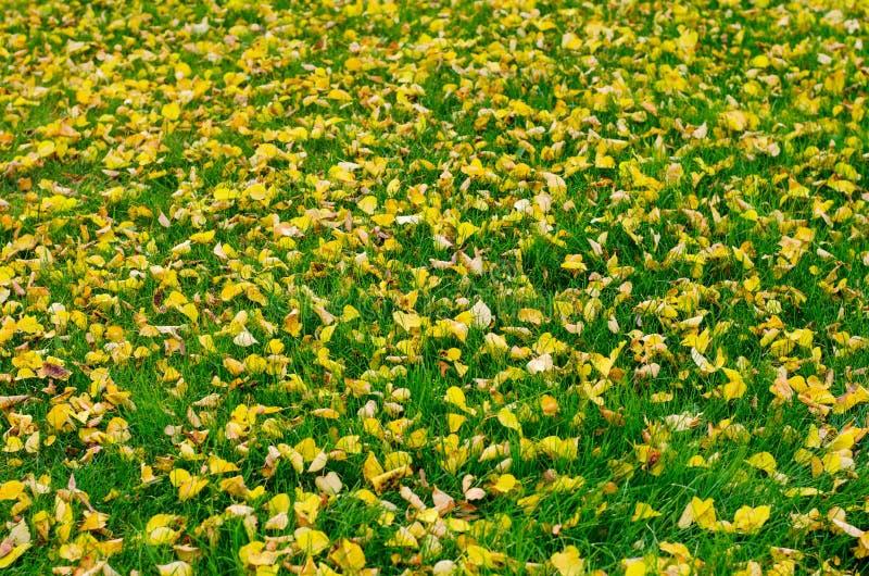 Hojas de oro caidas oto?o en hierba verde fotografía de archivo libre de regalías