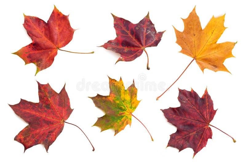 Hojas de otoño 1 fotografía de archivo