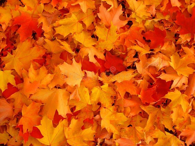 Hojas de otoño.