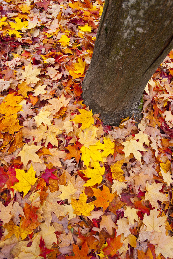 Hojas de otoño imagenes de archivo