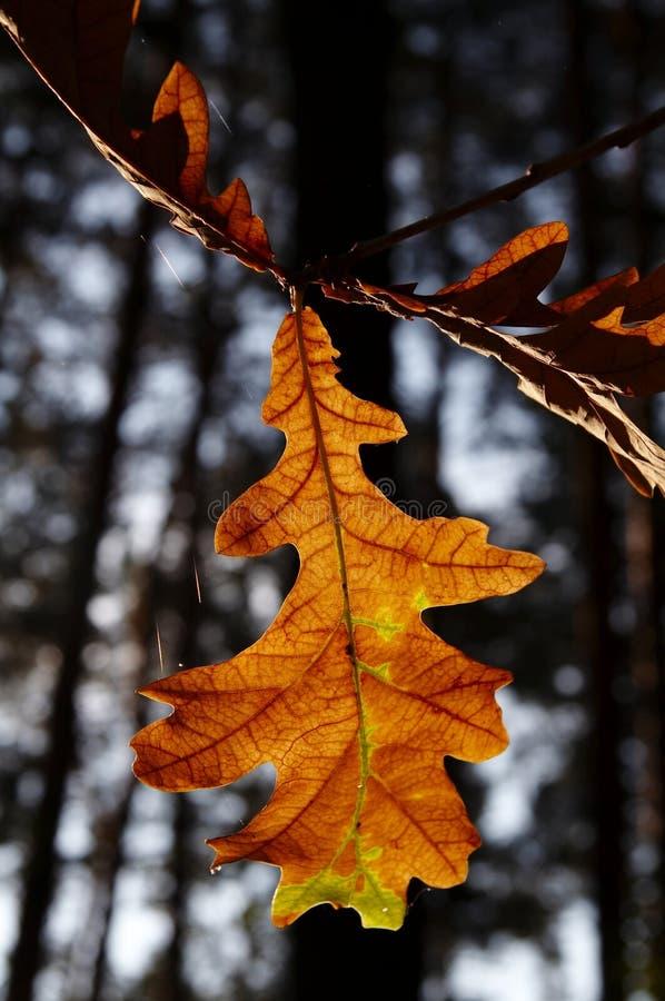 Download Hojas de otoño imagen de archivo. Imagen de inspiración - 1296795
