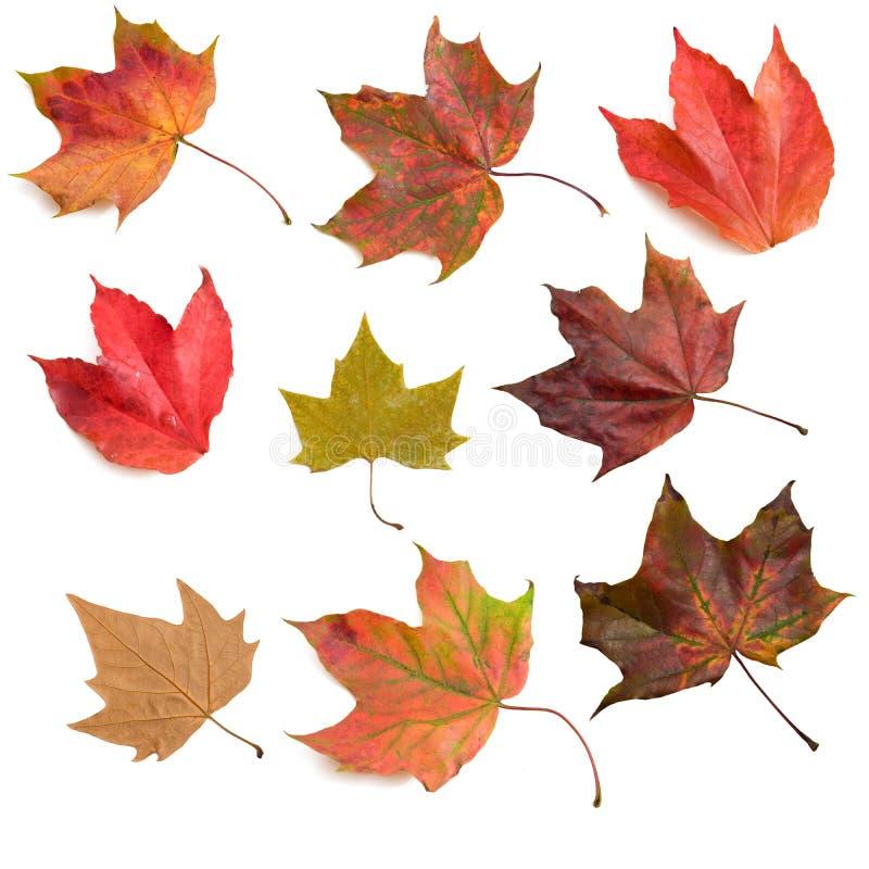 Hojas de otoño 2 fotos de archivo libres de regalías
