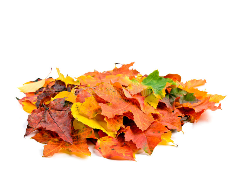 Hojas de otoño aisladas fotografía de archivo libre de regalías
