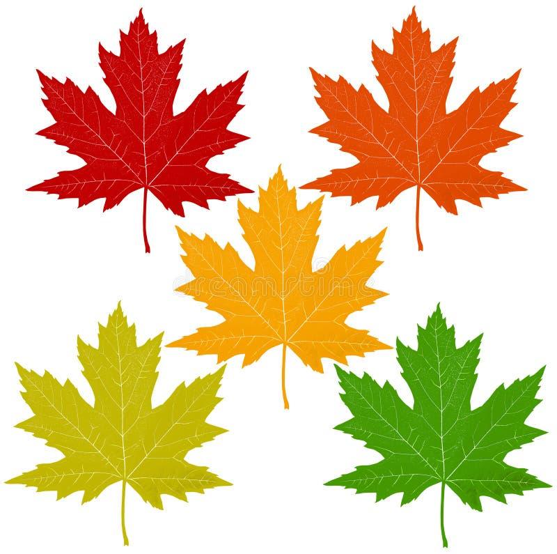 Hojas de otoño aisladas en blanco ilustración del vector