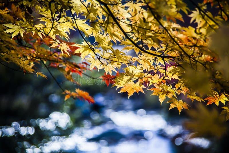 Hojas de otoño al lado del agua imagen de archivo libre de regalías