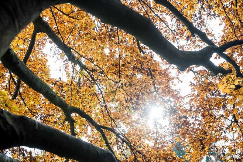 Hojas de otoño amarillas coloridas imagen de archivo libre de regalías