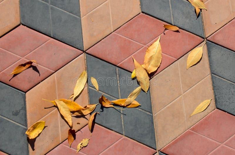 Hojas de otoño amarillas en una teja del camino imágenes de archivo libres de regalías