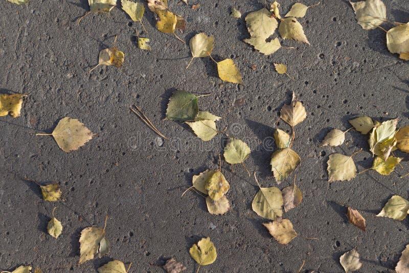 Hojas de otoño amarillas en una trayectoria concreta fotografía de archivo libre de regalías