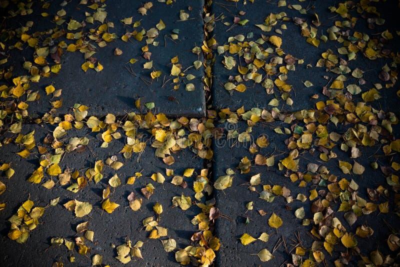 Hojas de otoño amarillas en una trayectoria concreta entonado fotos de archivo libres de regalías