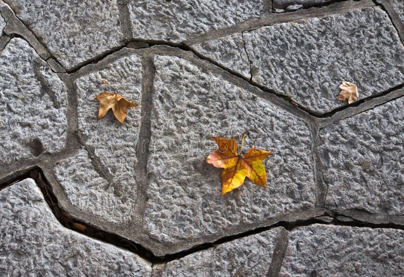 Hojas de otoño amarillas en una trayectoria de la teja concreta fotografía de archivo