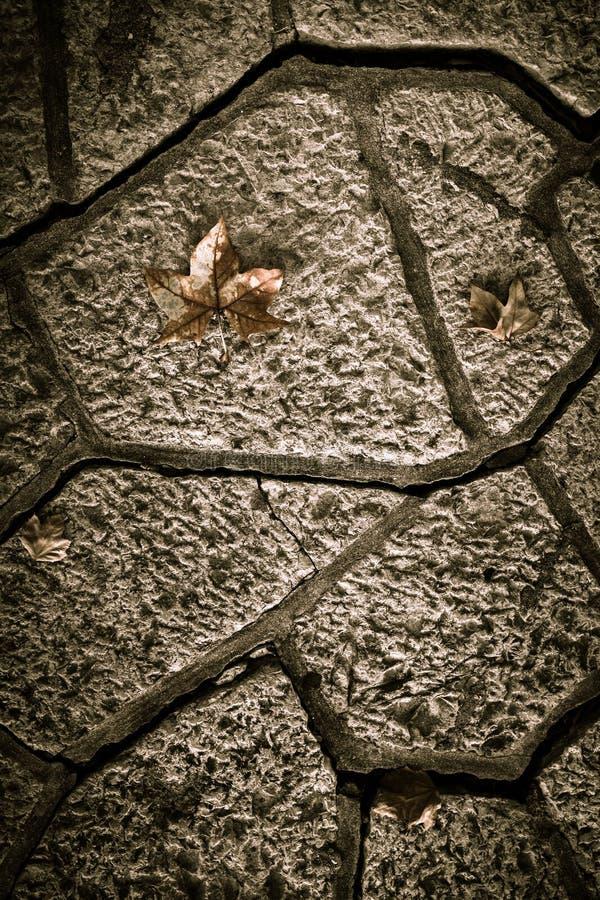 Hojas de otoño amarillas en una trayectoria de la teja concreta entonado imagen de archivo libre de regalías