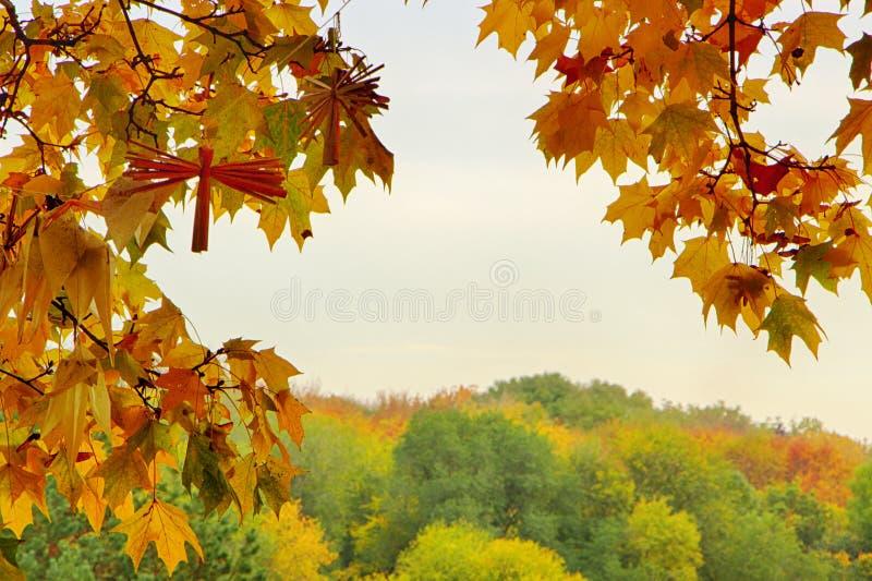 Hojas de otoño brillantes en el ambiente natural foto de archivo