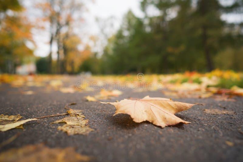 Hojas de otoño caidas en la foto del ángulo bajo del primer de la acera del asfalto a mediados de octubre fotografía de archivo libre de regalías