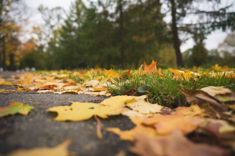Hojas de otoño caidas en la foto del ángulo bajo del primer de la acera del asfalto a mediados de octubre foto de archivo