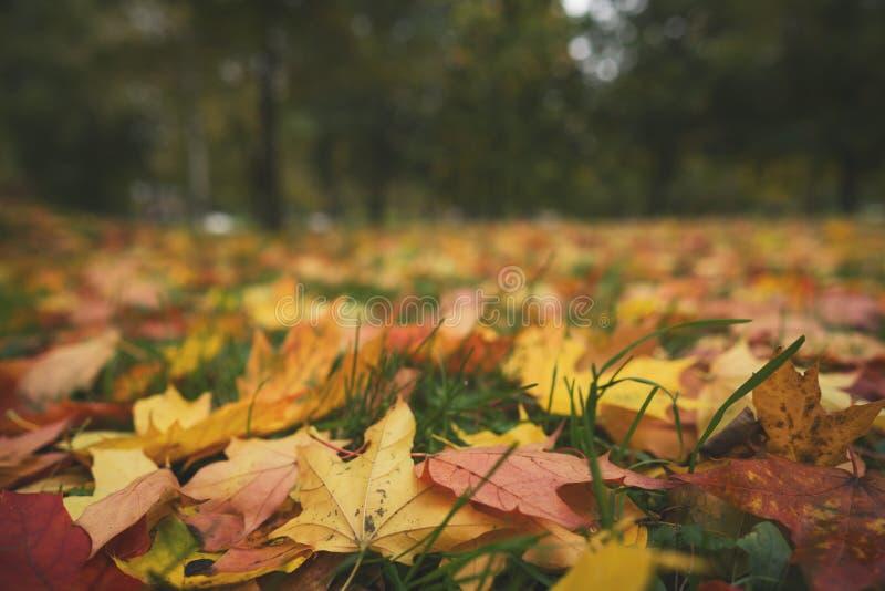 Hojas de otoño caidas en la foto del ángulo bajo del primer de la tierra a mediados de octubre fotos de archivo