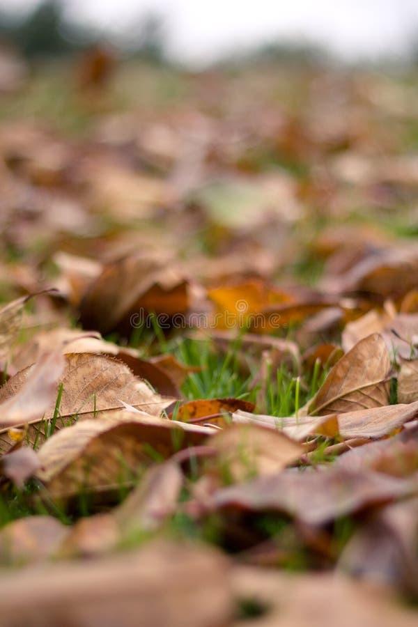 Hojas de otoño caidas (Ontario, Canadá) imagen de archivo