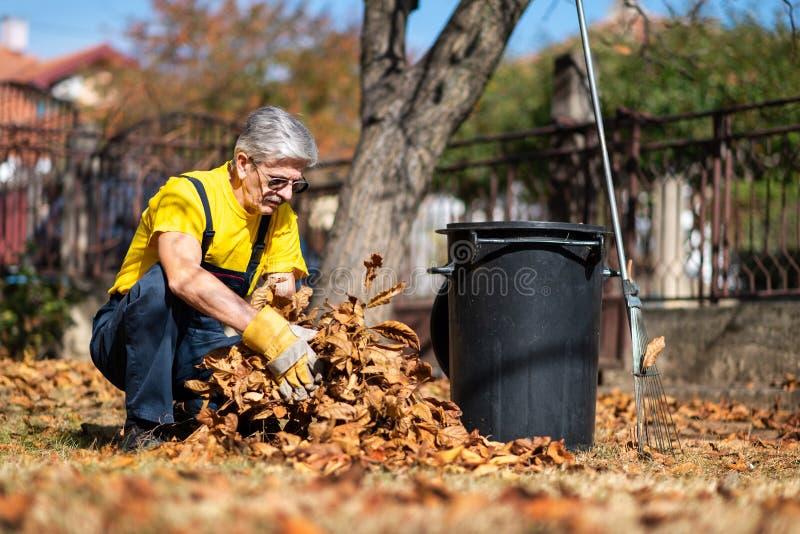 Hojas de otoño caidas de recogida mayores en la yarda imagen de archivo libre de regalías