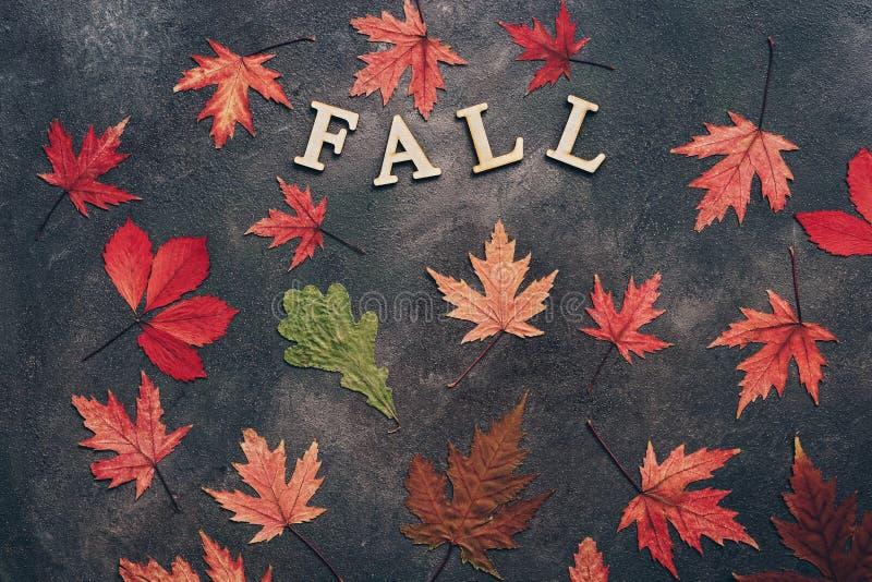 Hojas de otoño coloreadas en un fondo oscuro Disposición creativa del otoño La palabra de letras de madera es caída Endecha plana fotografía de archivo libre de regalías