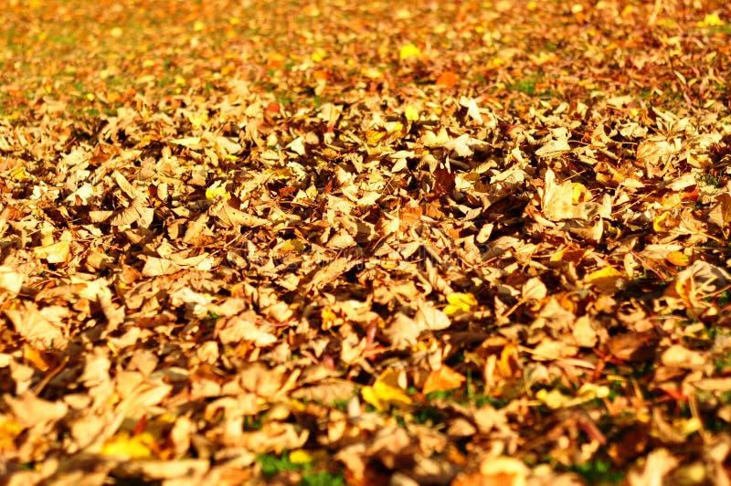 Hojas de otoño coloridas imagen de archivo libre de regalías