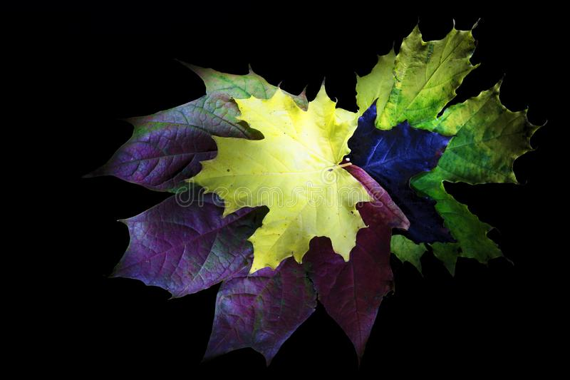Hojas de otoño coloridas en fondo negro fotos de archivo