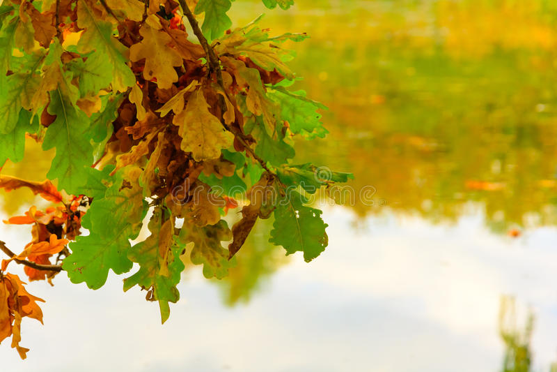 Hojas de otoño coloridas en la orilla del lago foto de archivo libre de regalías