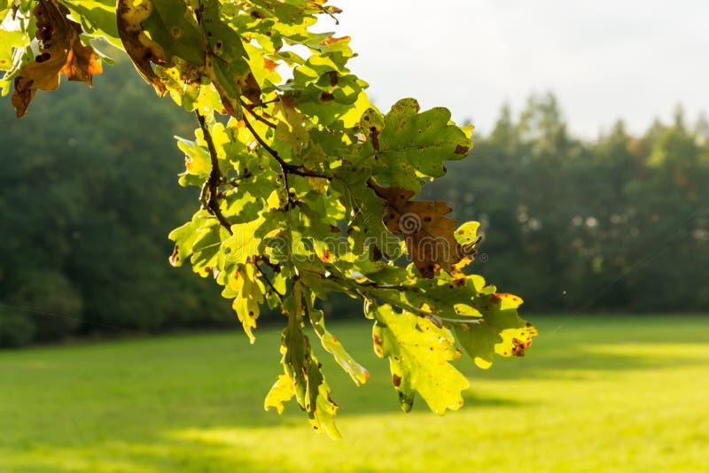 Hojas de otoño coloridas en la puesta del sol imagen de archivo