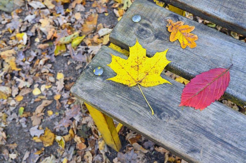 Hojas de otoño coloridas en un banco de madera viejo en el parque fotografía de archivo