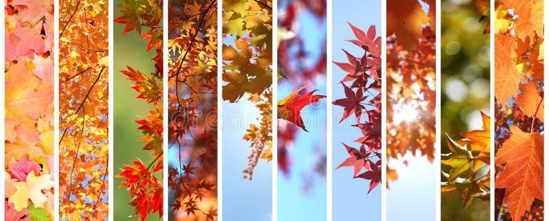 Hojas de otoño coloridas fijadas imágenes de archivo libres de regalías