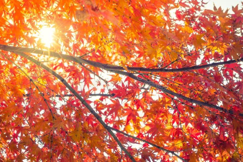 Hojas de otoño coloridas hermosas imagen de archivo libre de regalías